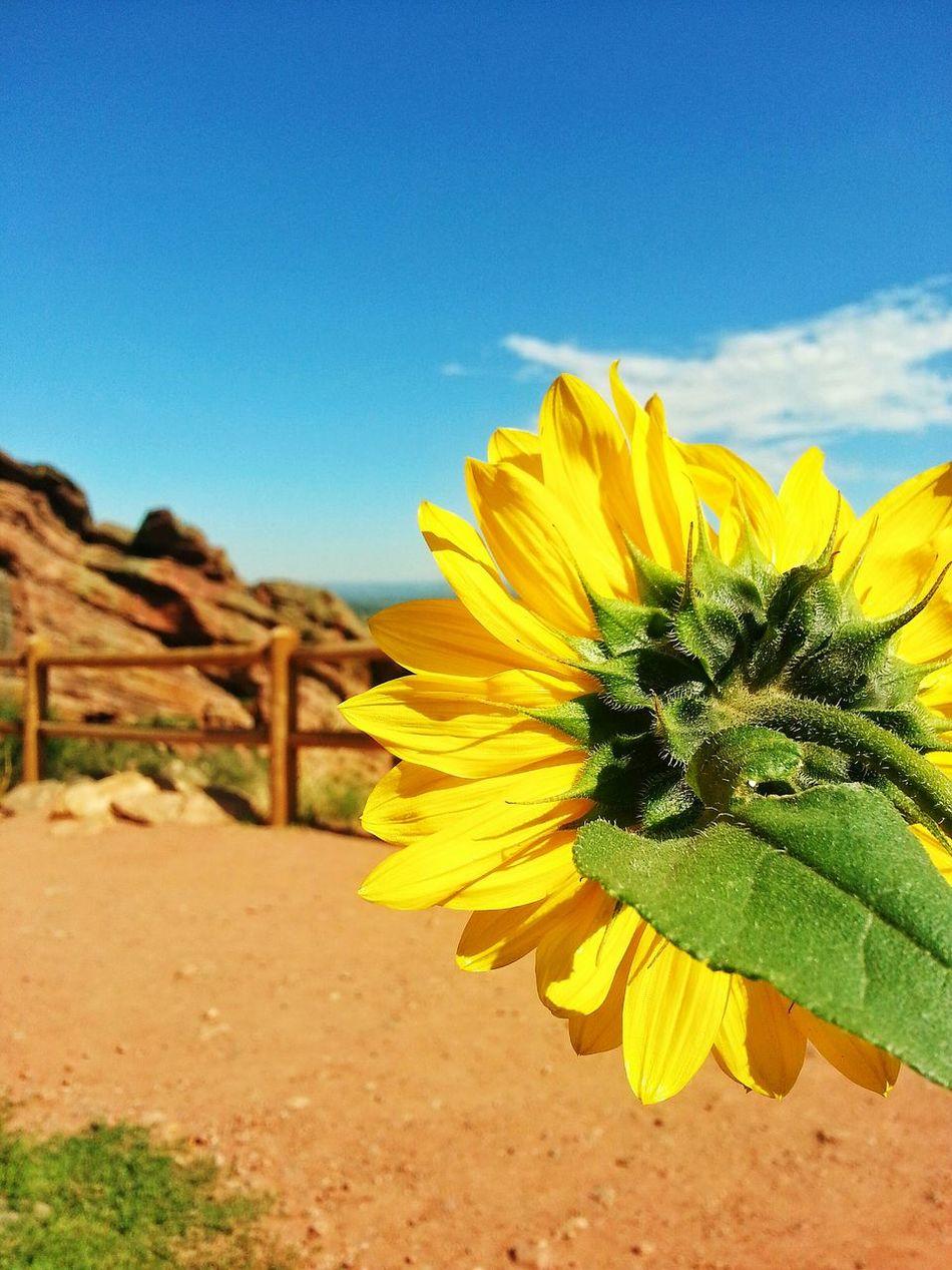 Colorado Coloradogram Redrocks I'm A Loner Myjobisbetterthanurs Picturing Individuality