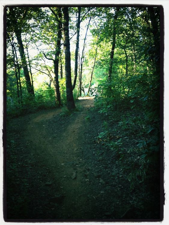 jogging at Horseshoe Trail by Pat Bronson