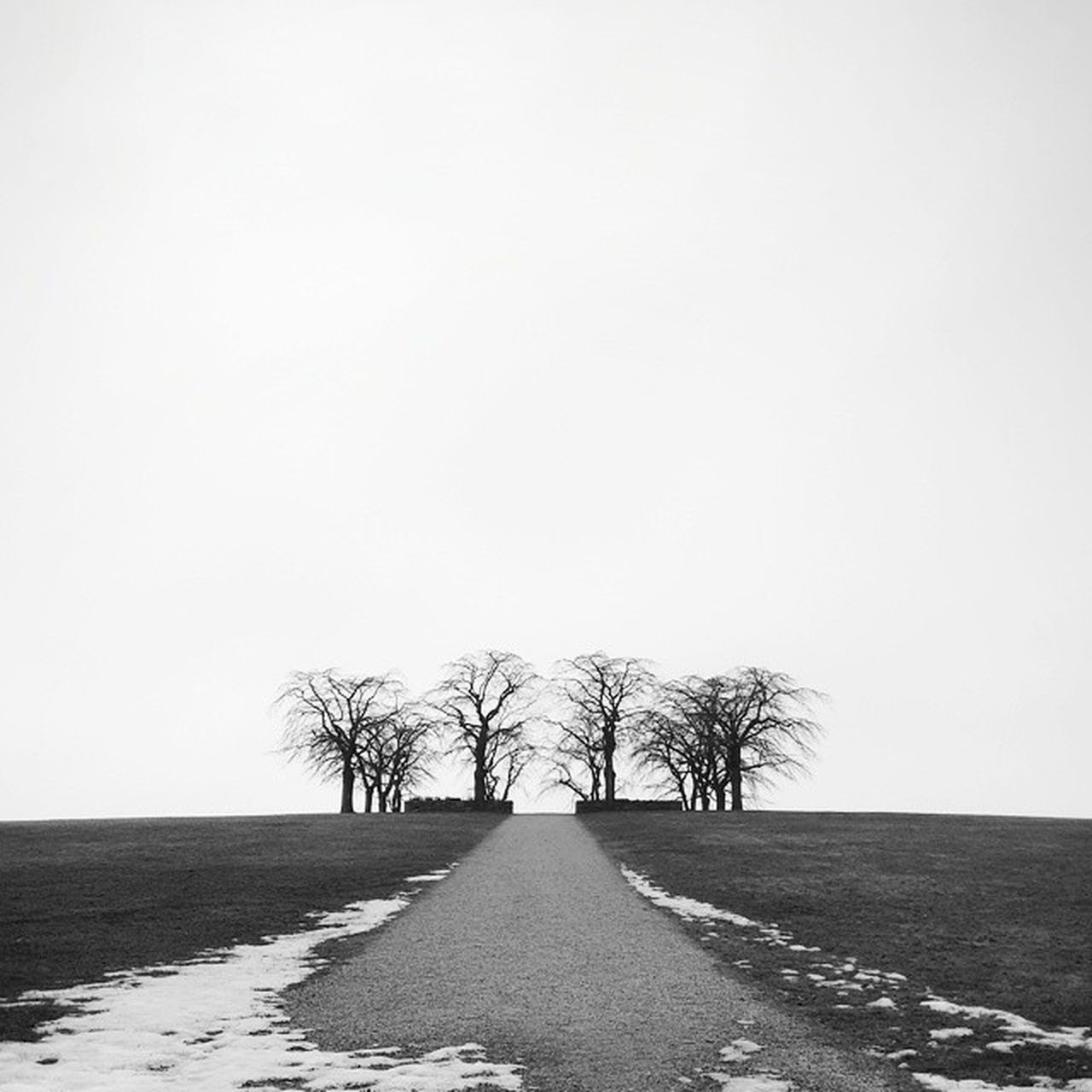 bare tree, tree, clear sky, tranquility, tranquil scene, nature, landscape, beauty in nature, the way forward, field, outdoors, day, scenics, road, sky, no people, lone, cold temperature, branch, snow, grass
