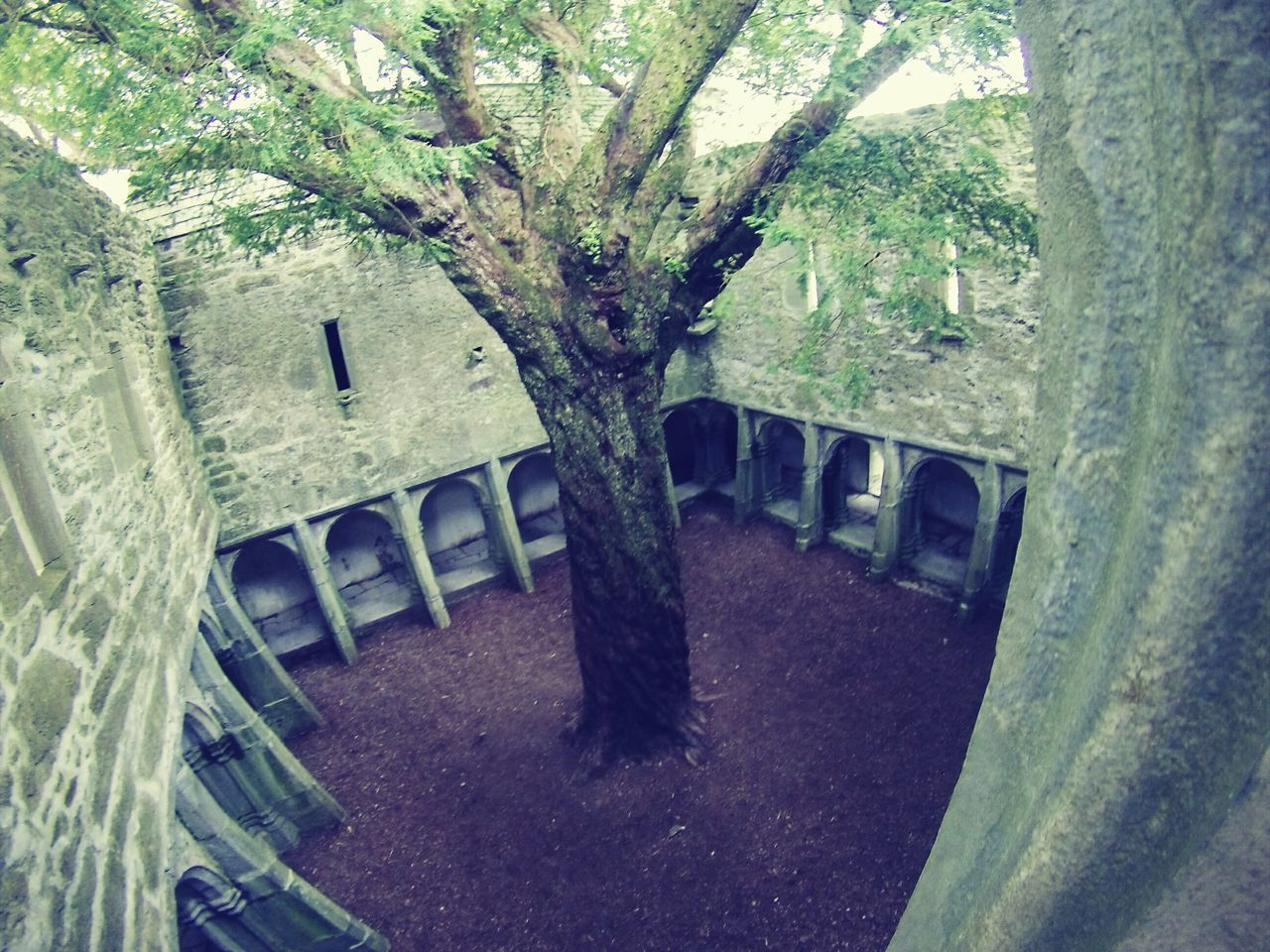 tree, no people, high angle view, day, tree trunk, nature, growth, outdoors, architecture, close-up