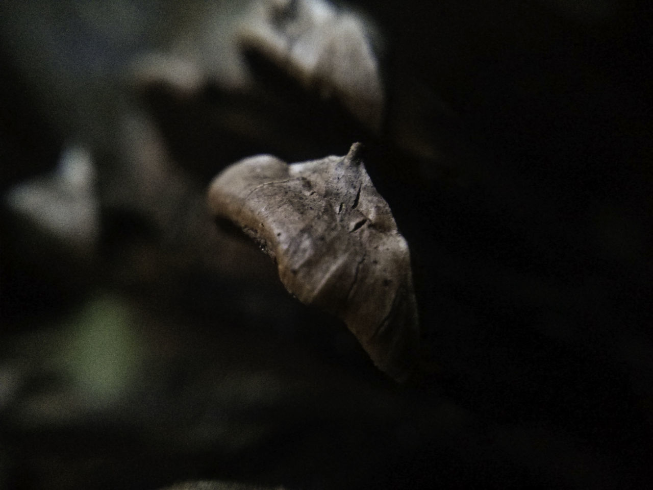 Macro of a scale from a Pinus elliottii pine cone. Botany Brown Close-up Day Detail Ecology Focus On Foreground Full Frame Macro Mystery Nature Nature Photography Outdoors Pine Pine Cone Selective Focus Sharp Textured