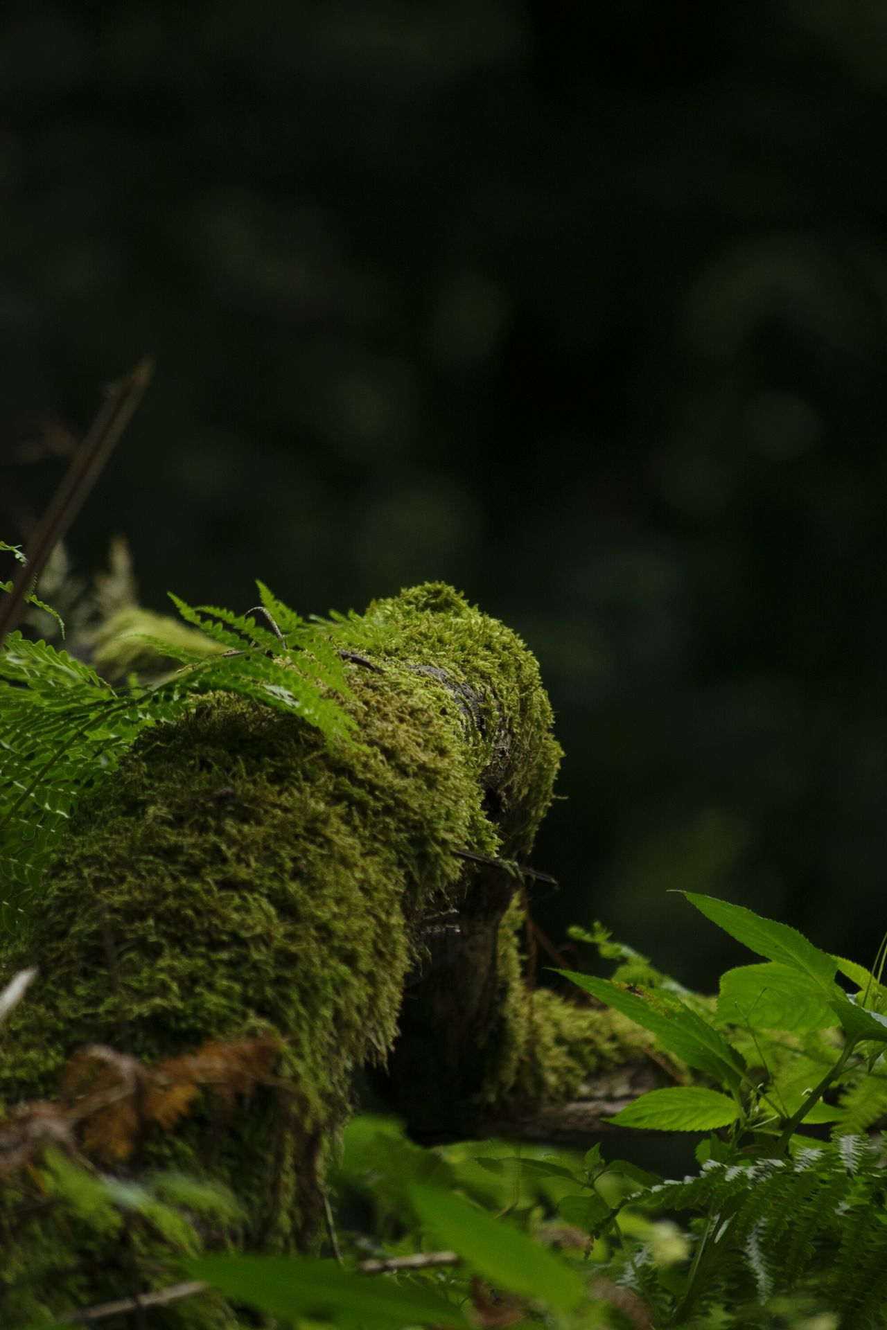 Forrest Photography Nature Photography Naturelovers Taking Photos Relaxing Enjoying Life Treetrunk Just Chilling Taking Photos