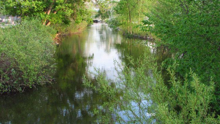Walking Around My Neighborhood Clam River Walkway Very Green Still Waters Reflections Cadillac Michigan