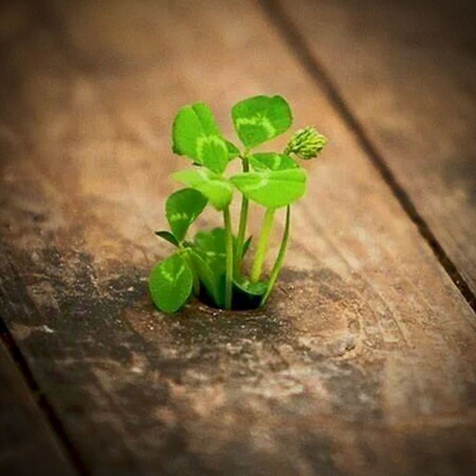 Growing Better There Is Always A Way Hope.✌