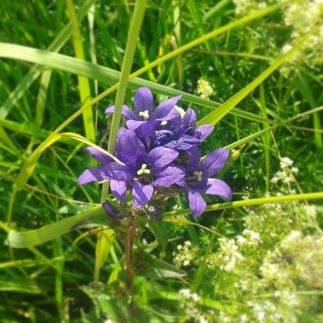 Flower No_effect Nature Violet green Grass
