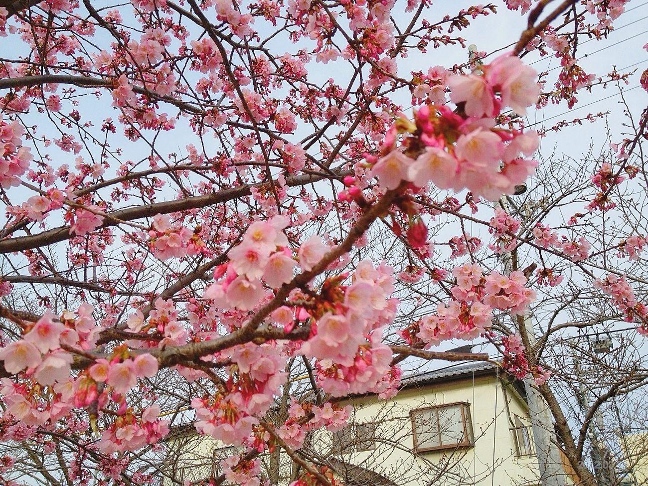 Flowers at 富田橋 Flowers