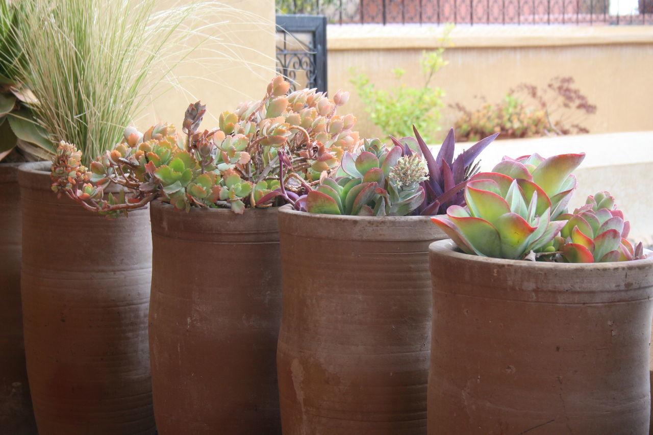 Flower Flower Pot Nature Plant Potted Plant Pottery Roof Garden Succulent Plant