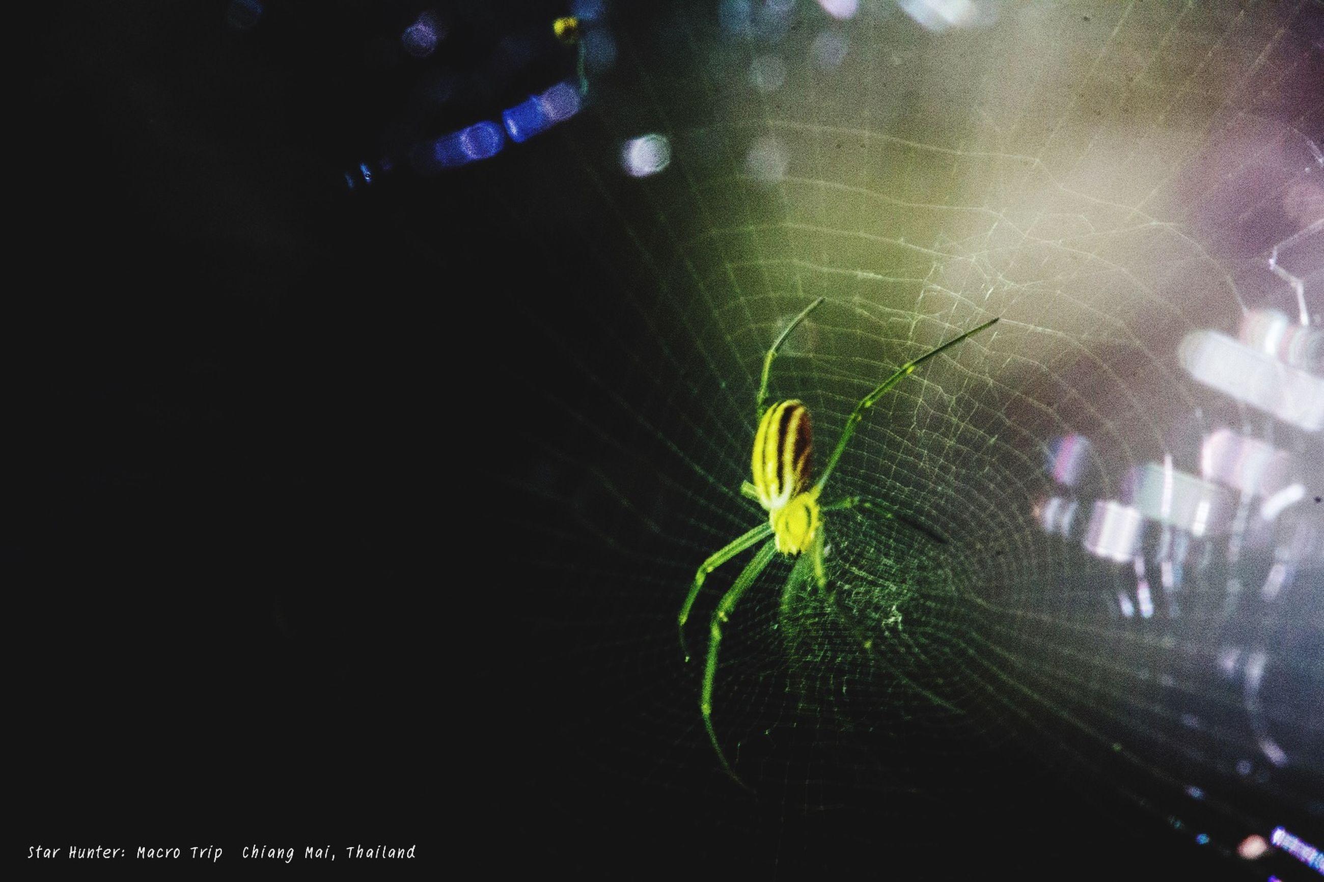 night, illuminated, indoors, animal themes, one animal, glowing, lighting equipment, blurred motion, dark, long exposure, spider web, motion, light - natural phenomenon, no people, close-up, wildlife, animals in the wild, spider, light