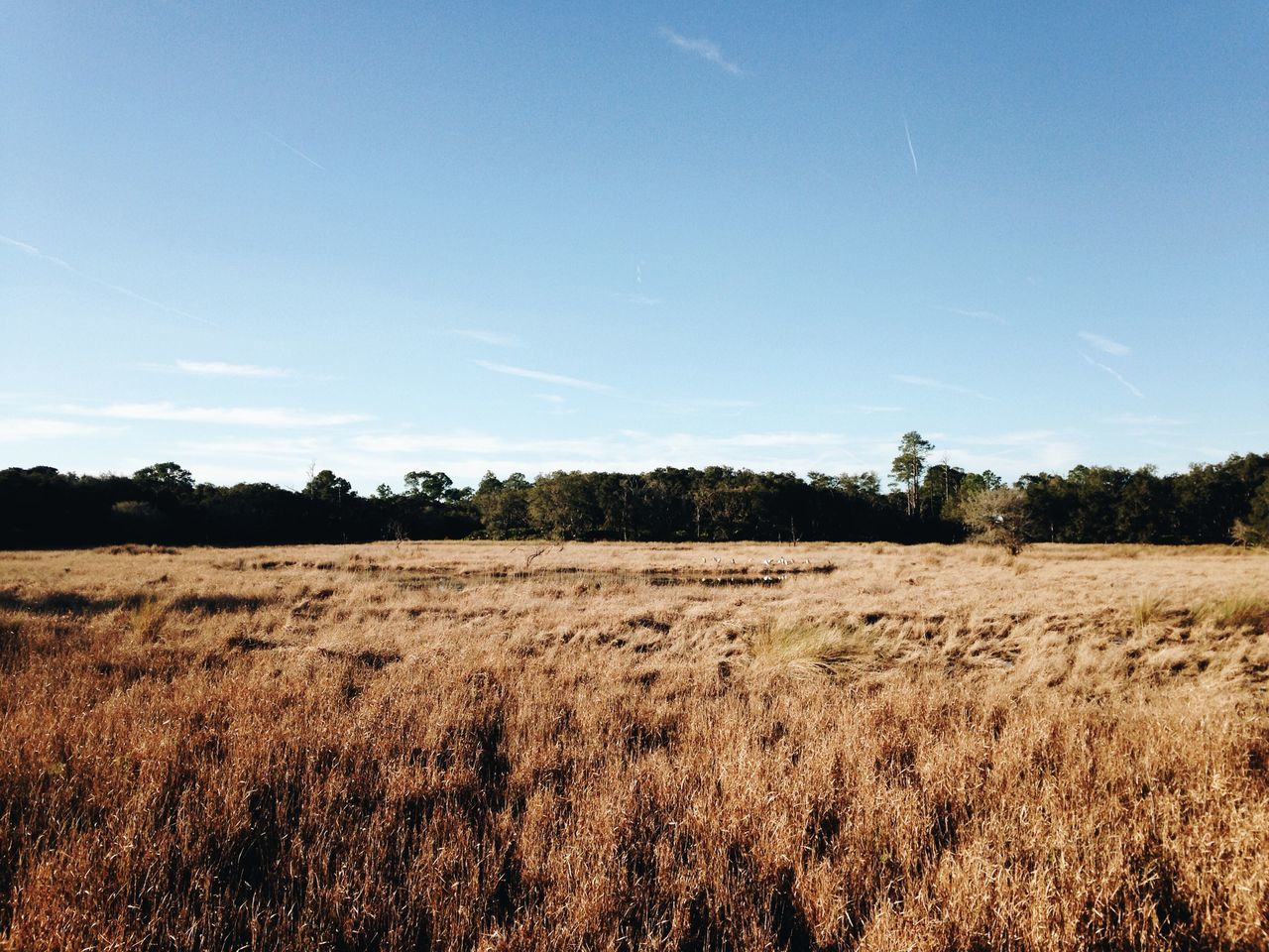 field, landscape, nature, tranquility, tranquil scene, beauty in nature, no people, scenics, tree, agriculture, growth, outdoors, day, grass, sky