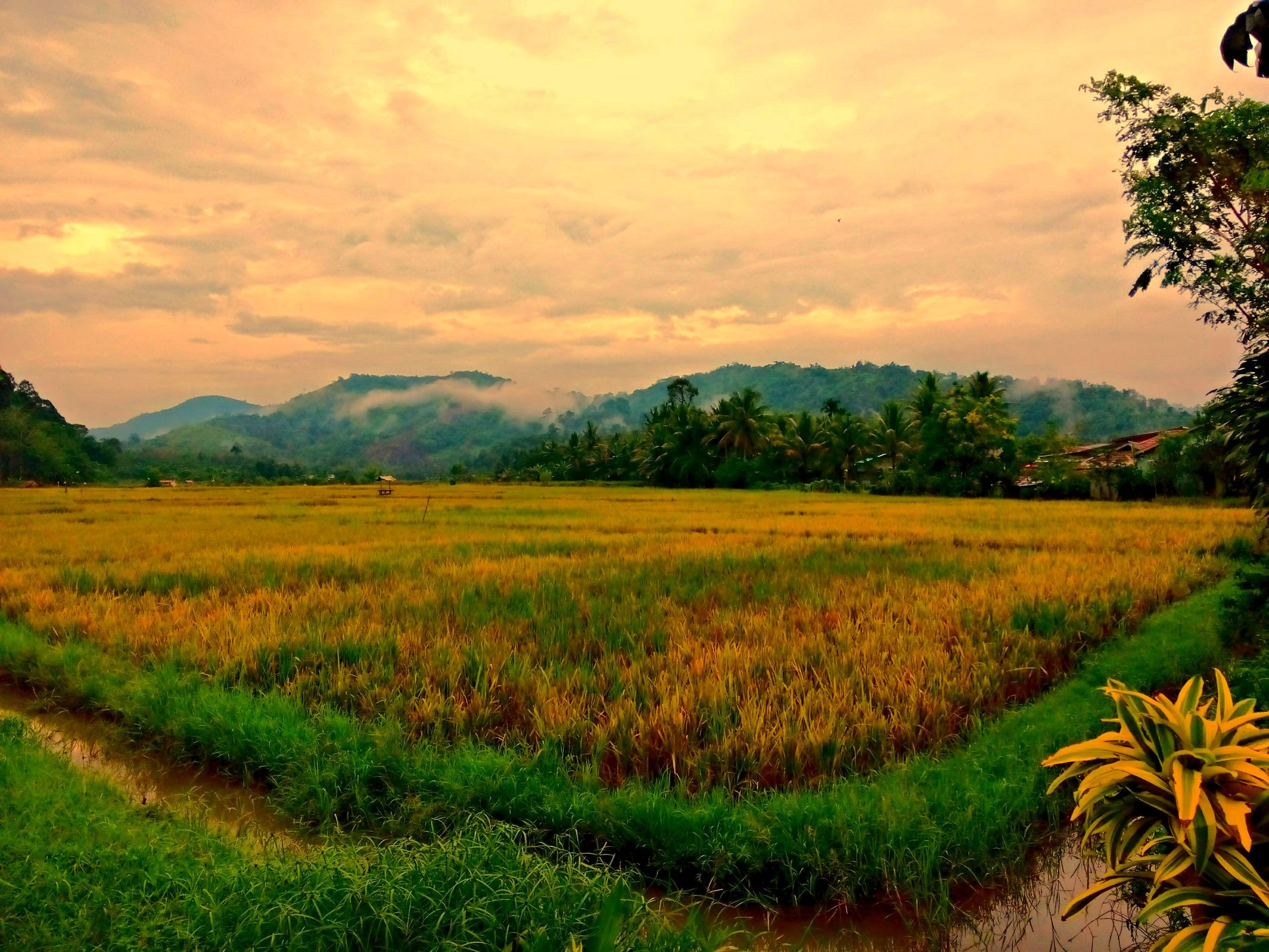 landscape, tranquil scene, sky, field, beauty in nature, tranquility, scenics, sunset, nature, rural scene, growth, cloud - sky, grass, agriculture, mountain, green color, tree, idyllic, farm, cloud