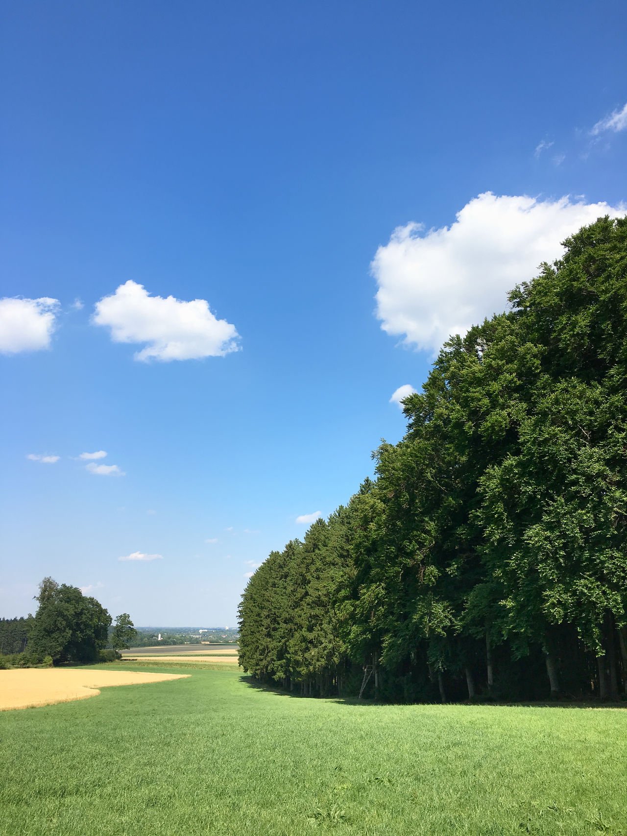 Wald-Wiese-Himmel Bavaria Beauty In Nature Blue Cloud - Sky Day Field Freshness Grass Green Color Growth Landscape Nature No People Oberbayern Outdoors Scenics Sky Sunlight Tranquil Scene Tranquility Tree Weissblau Weiß Und Blau