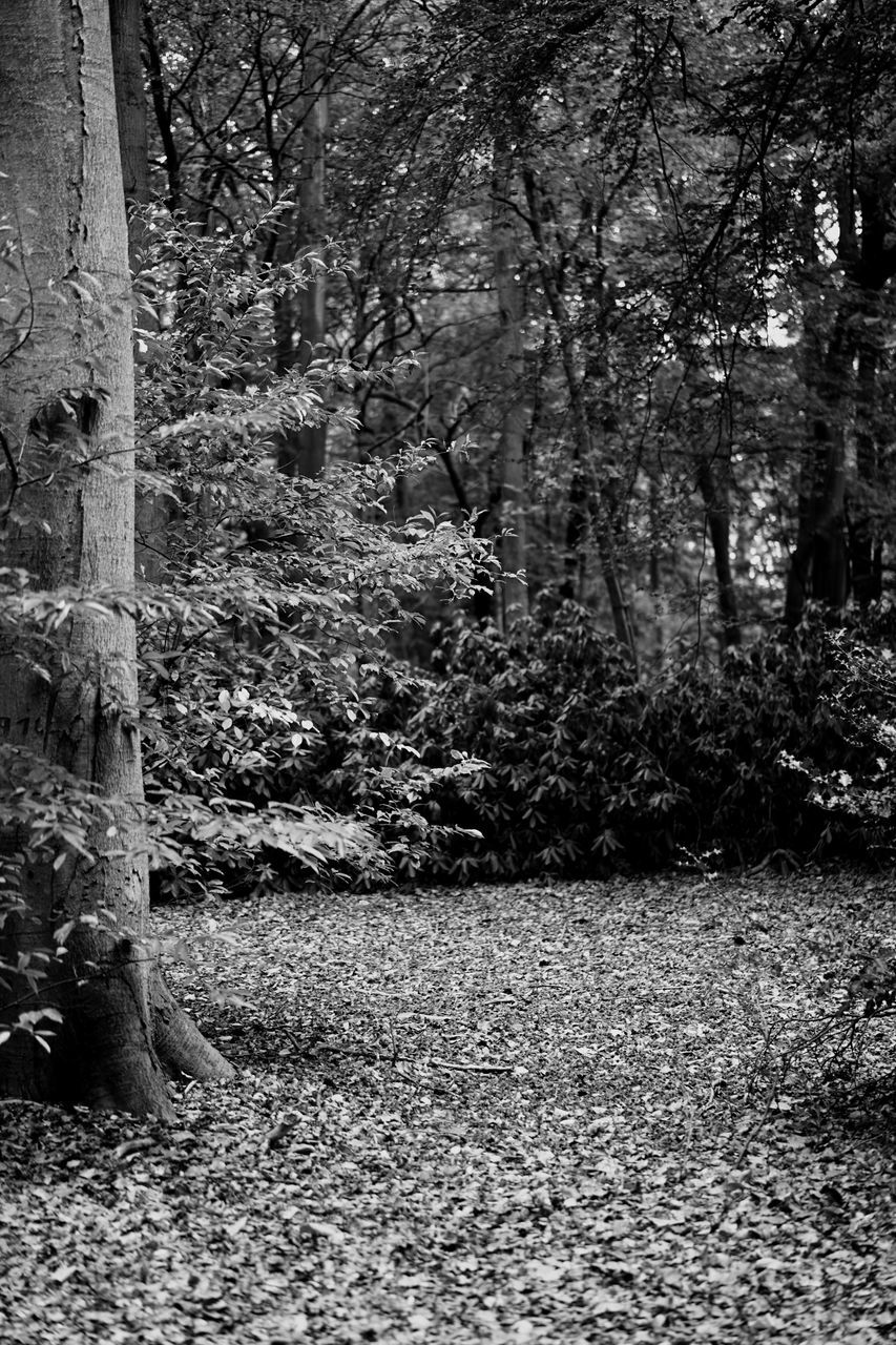 tree, forest, nature, day, no people, tree trunk, outdoors, growth