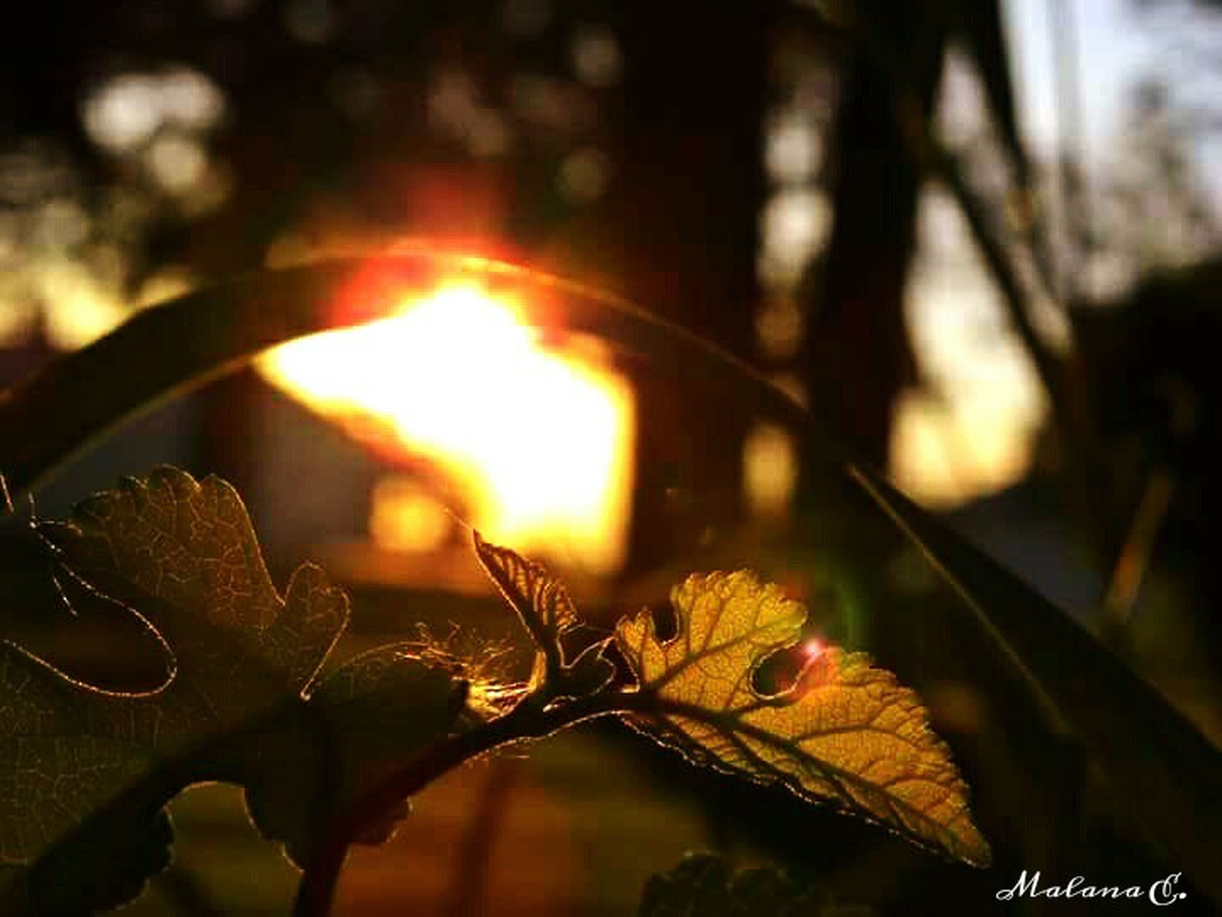 focus on foreground, close-up, orange color, selective focus, leaf, sunset, sunlight, flame, nature, outdoors, no people, glowing, burning, metal, fire - natural phenomenon, dry, sun, autumn, plant, silhouette