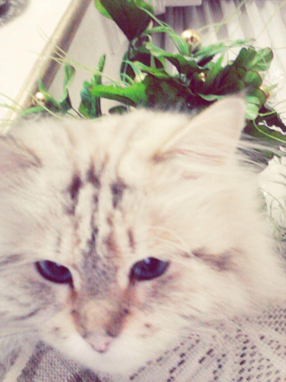 SmSm my cat ^^