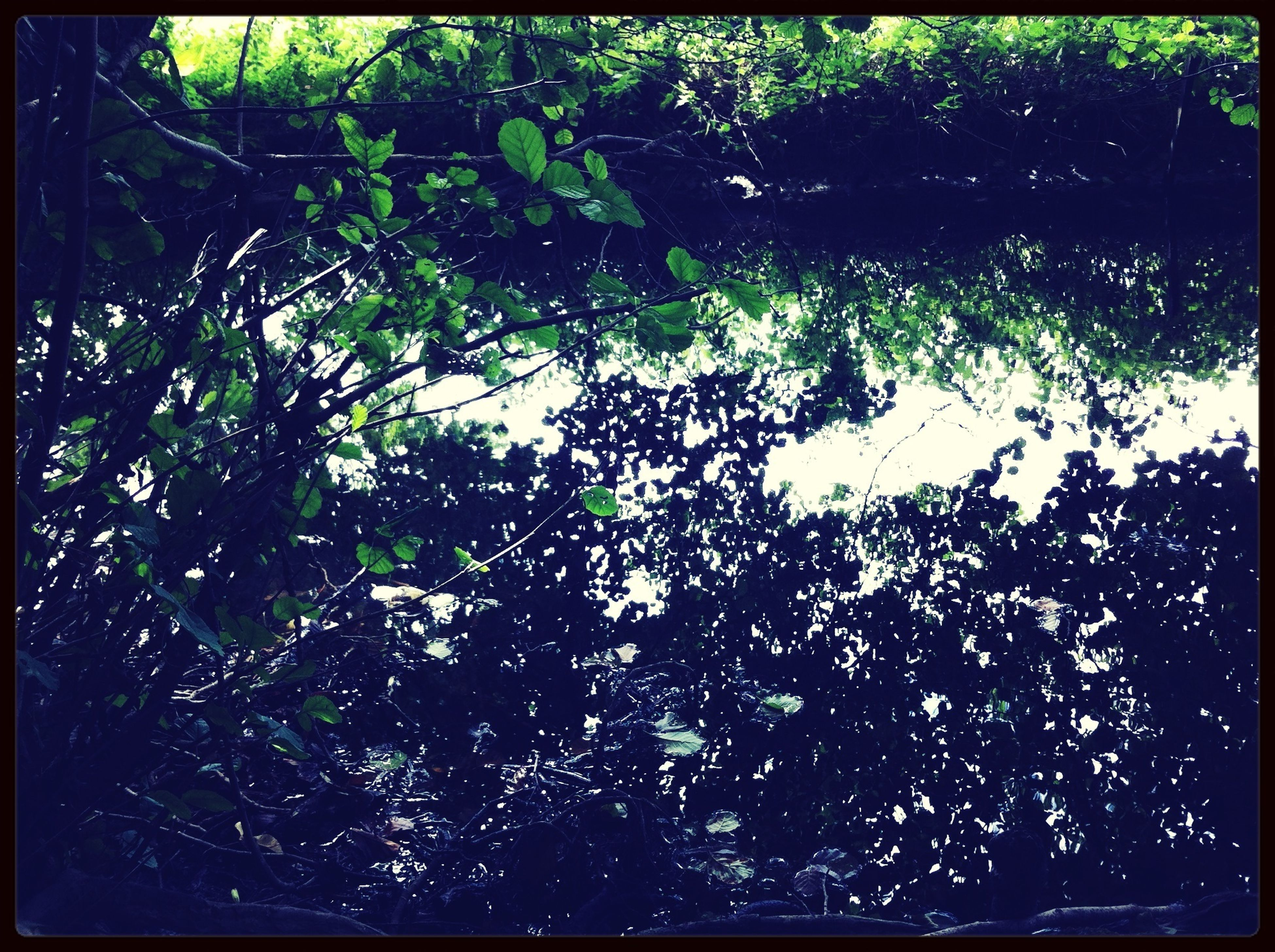 transfer print, auto post production filter, water, tree, growth, nature, reflection, plant, beauty in nature, backgrounds, full frame, high angle view, leaf, tranquility, outdoors, branch, lake, no people, day, sunlight
