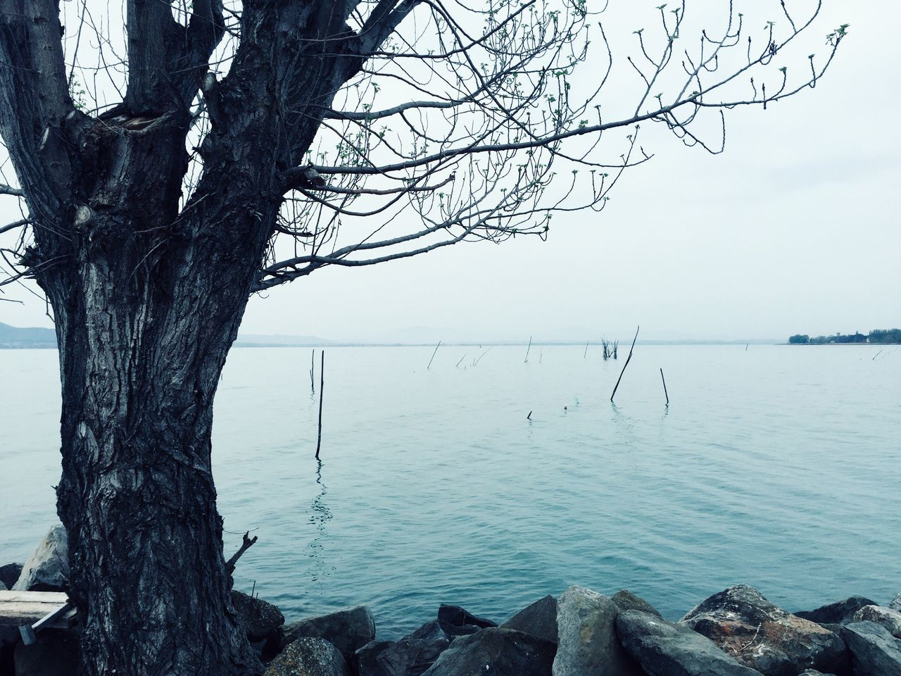Close To The Horizon, by Claudia Ioan Tree Water Nature Tranquility Beauty In Nature Sky Horizon Over Water No People Outdoors Bare Tree Day Lake Trasimeno Umbria VSCO Nature Landscape