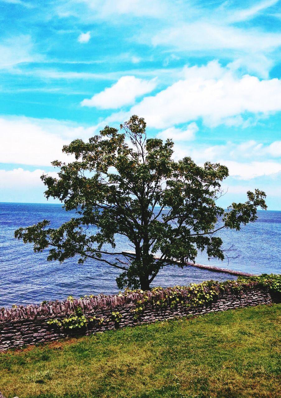 View Of Tree At Coast