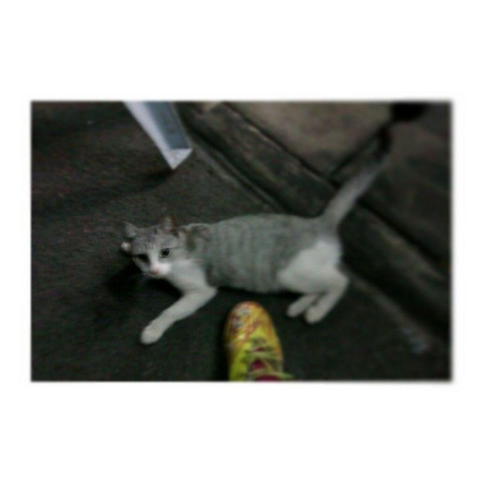 Meow meow dia bau kasut futsal ku bau cagu ku Meow Cat Canaicafe Cagu bau gitu krikkrikkrik huhu mamak