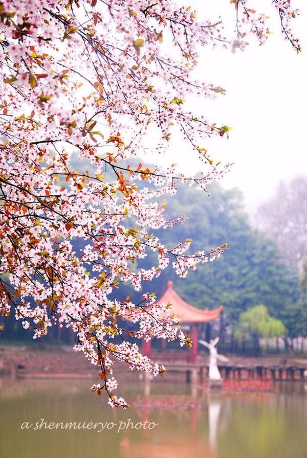 spring Shenzhen Taking Photos Relaxing Enjoying Life
