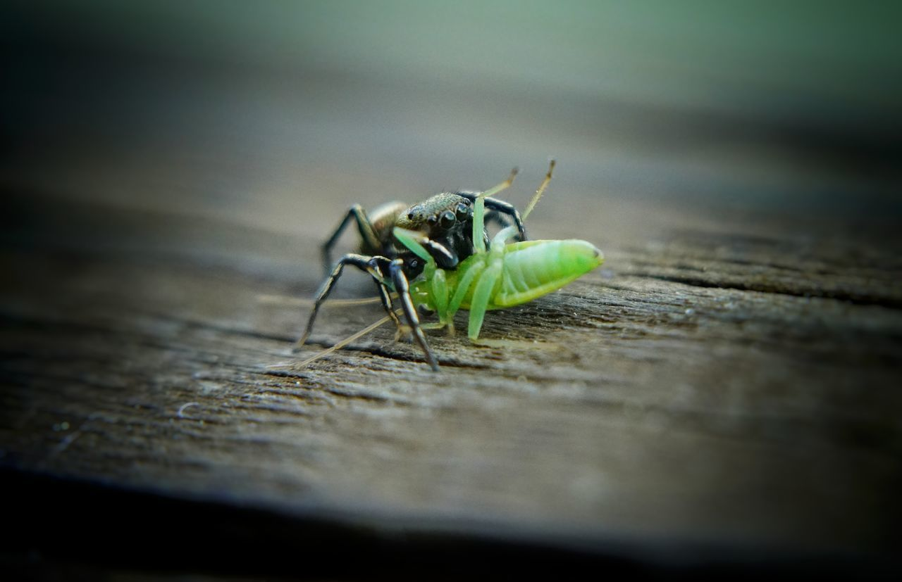 Insect Animals In The Wild Animal Themes Animal Wildlife Wood - Material Selective Focus One Animal No People Close-up Day Outdoors Nature Green Macro Photography Fe9028macro Macrophotography Macro Insects Macroporn Macro Beauty Sony A7rm2 Sony A7RII Luca Riva
