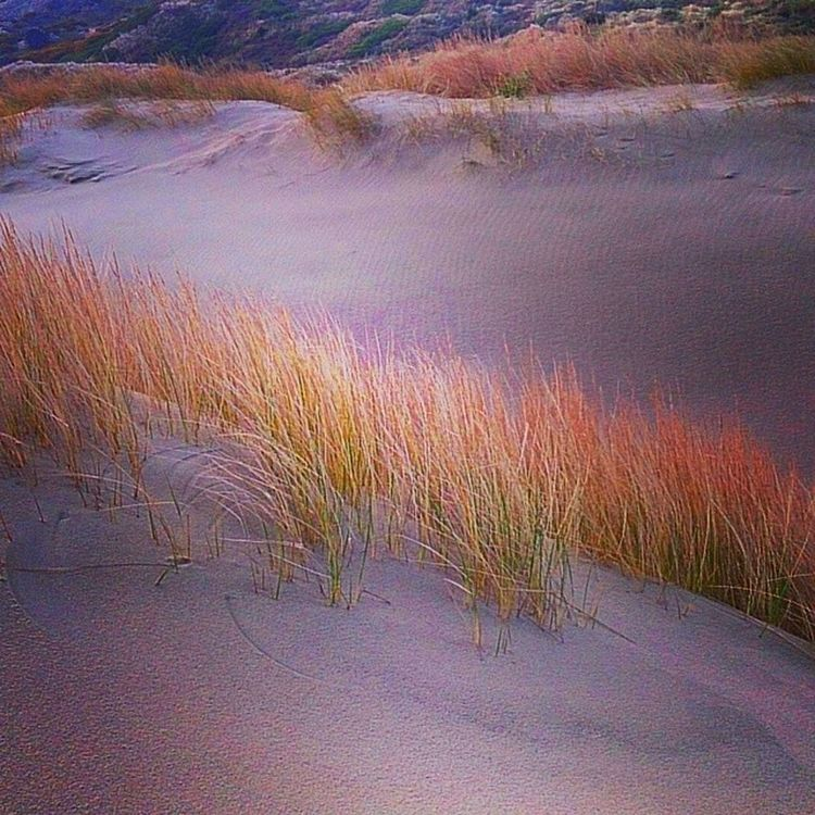 Dunes Sand Beach Rushes nz