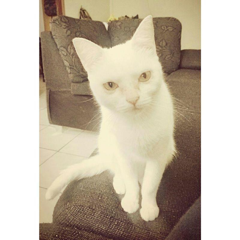 Princesa 🐈💛 Catlove Ma Baby So Much Love