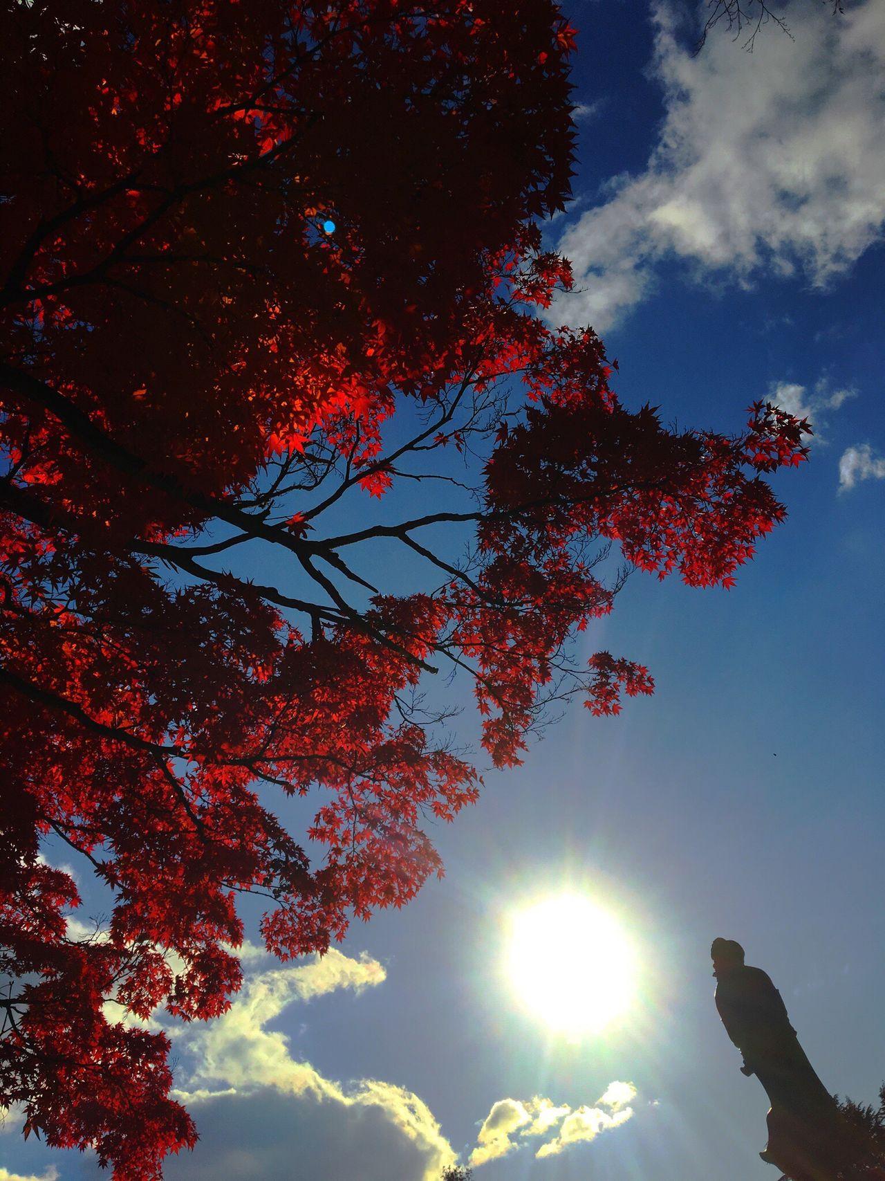 市街地でも紅葉が真っ赤に染まりましたね。秋から冬へ真っしぐらです。 Tree Low Angle View Nature Sky Sunlight Sunbeam Beauty In Nature Cloud - Sky Day Sendai Days Statue Of Peaceful Prayers Clouds And Sky Autumn Autumn Colors Autumn Leaves Autumn Leaves Have Fallen, Winter Is Approaching... Miyagi
