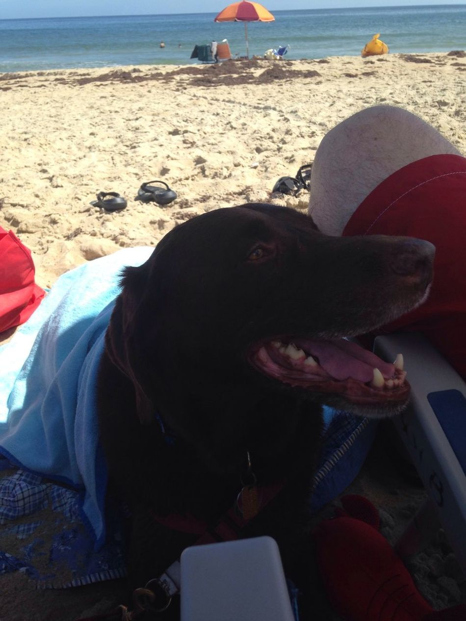 Mom wrapped me up in a towel to keep me cool. Ted Travels Hanging Out Beach Life OBX14