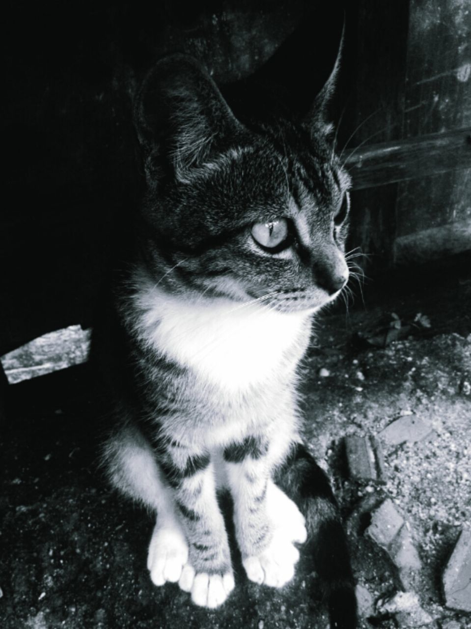 domestic cat, domestic animals, animal themes, one animal, pets, feline, mammal, cat, no people, whisker, sitting, looking at camera, portrait, day, indoors, close-up