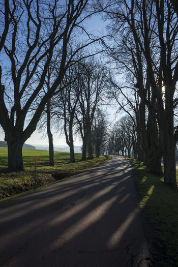 Allee Bäume Country Road Landscape Landstrasse On The Road Outdoors The Way Forward Tranquility Trees
