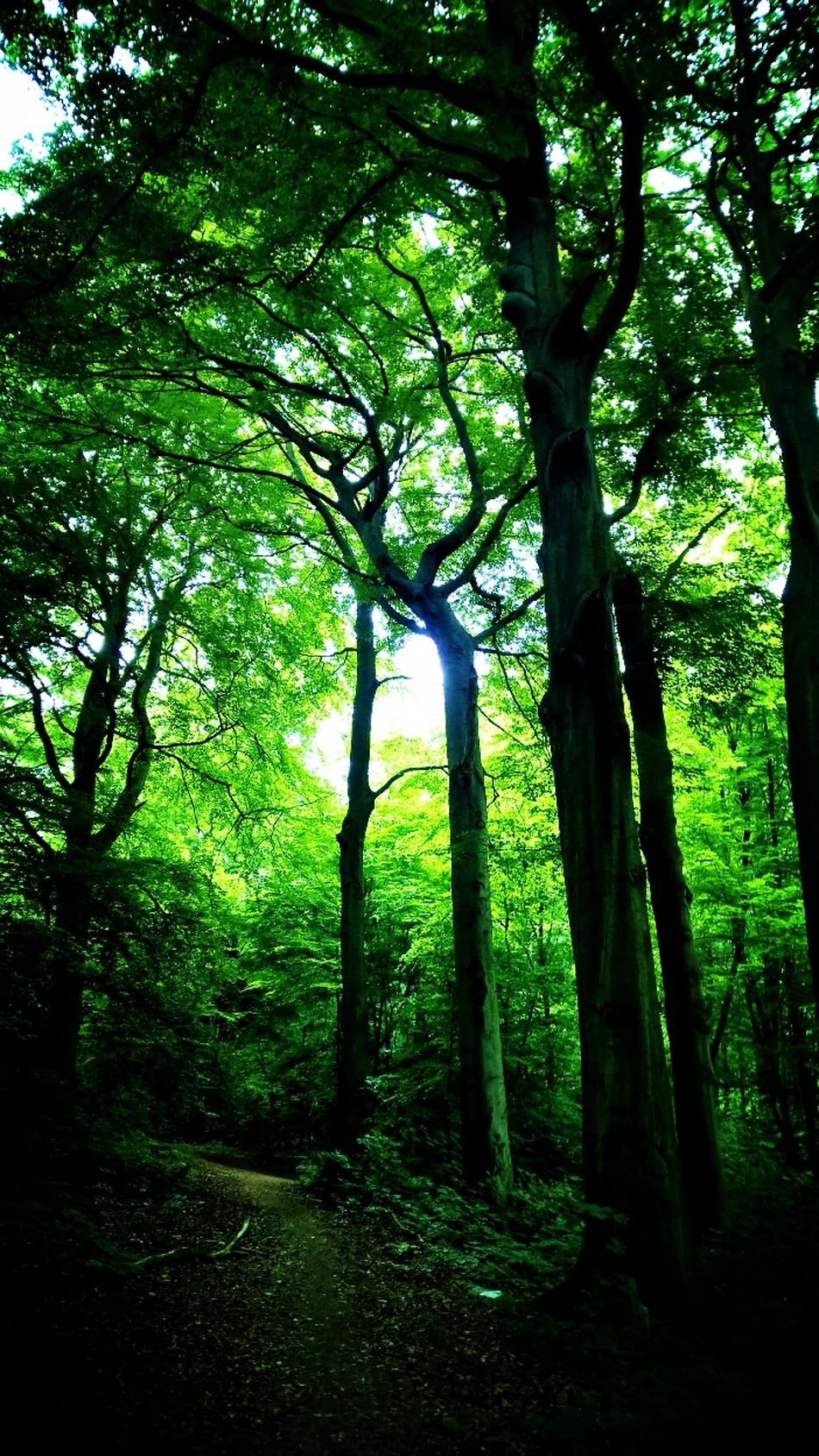 Tree Green Color Nature Growth Beauty In Nature No People Branch Day Mystery Forest Forest Photography Fairyforest Shadow Moment Awakening Leafs 🍃 Dreamy Light