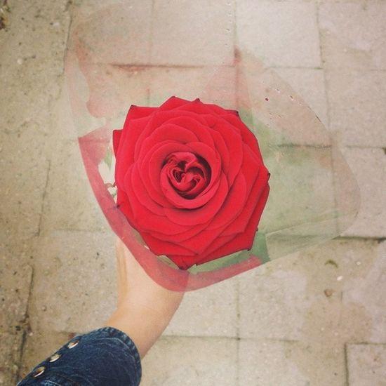 Gavau Grazia Gelytę Raudoną rože rose