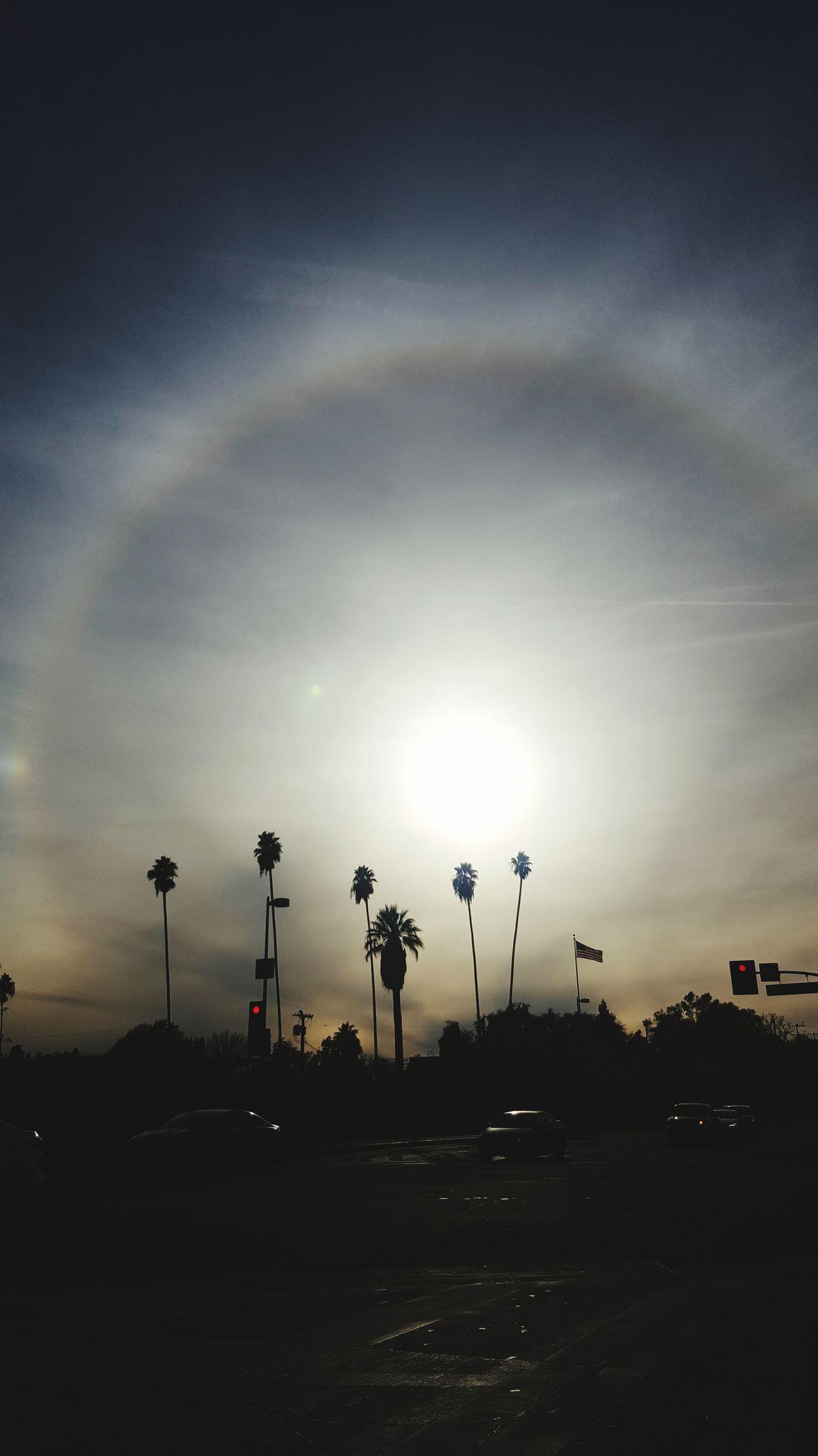 LA SkyLine Sun Light Street Light Sun Glare Rainbow Circular Pattern Circular Rainbow Lense Glare Palm Trees Galaxys6 Galaxy S6 Skyporn