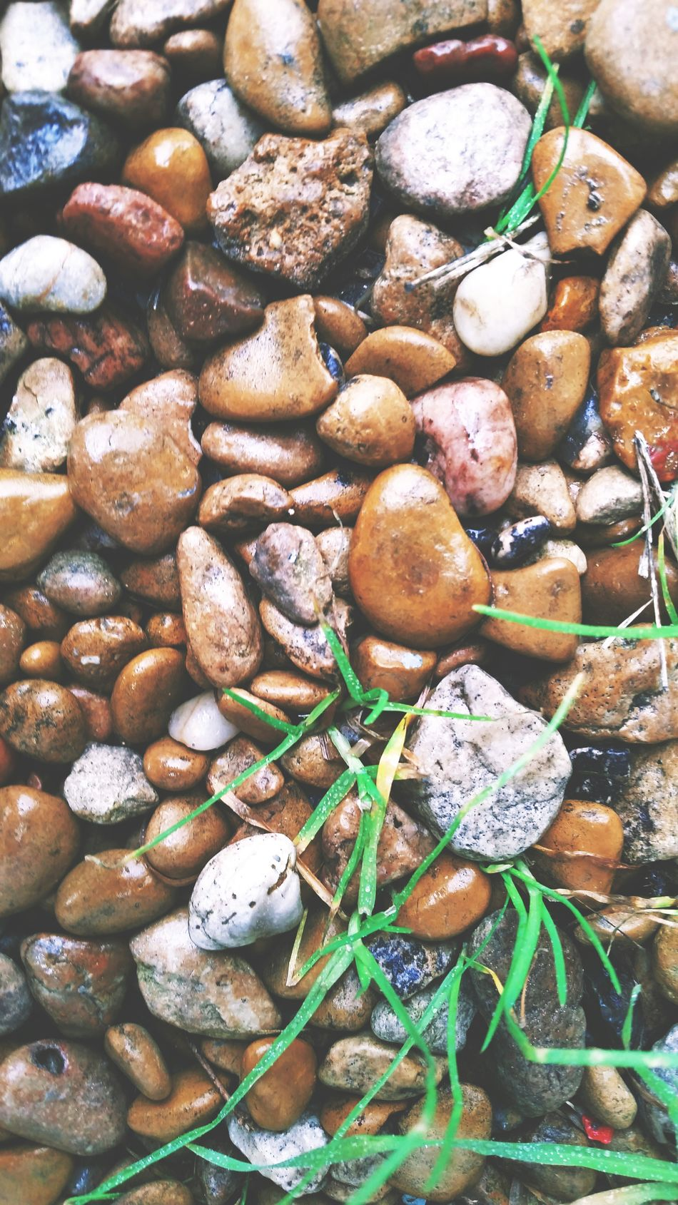 Beautiful stock photos of rock, Backgrounds, Beach, Day, Extreme Close Up
