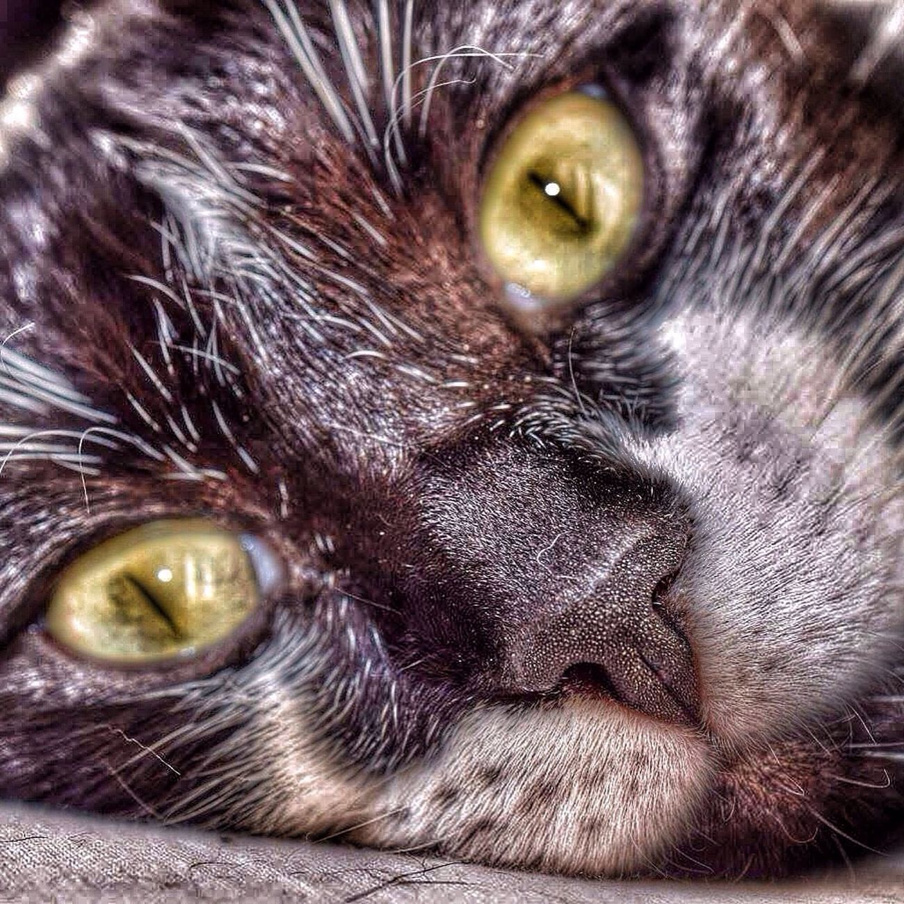 Cats Hello World Relaxing Cat Photooftheday Eye4photography  Italianeography IPhoneography