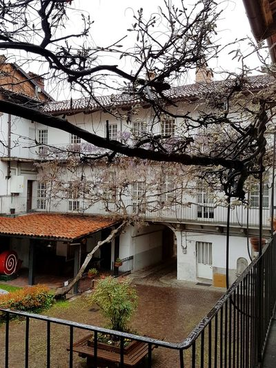 Building Exterior Window Built Structure Architecture Tree No People Residential Building Outdoors Day City Sky Balcony Wisteria Italian Architecture Piedmont Italy Travel Destinations History Urban Courtyard  From The Balcony Rainy Day