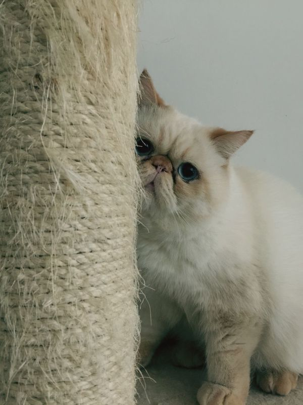 Animal OpenEdit Cute Pets HongKong Cute Cats Animals Cat Cat Lovers Cats Cat♡