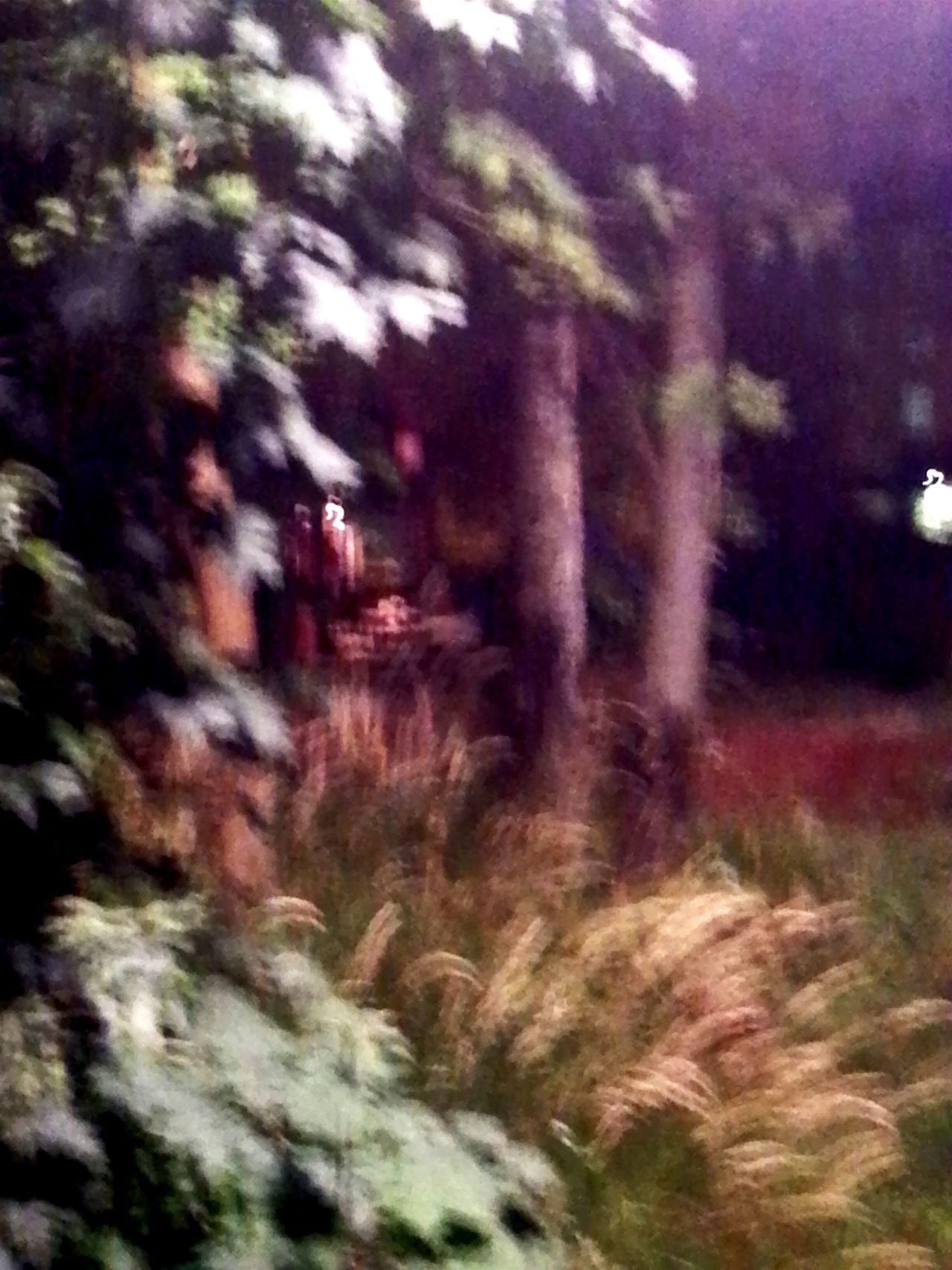 TreePorn Magical Nightvision Strange Photo Mystical Blur