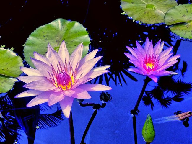 Relaxing Flowers Free Nature_collection Flowers Macrophotography EyeEm Macro Macro Nature Macro_collection Macro_captures Macro Macroclique . Fairchild Tropical & Botanic Garden. Miami, Fl.