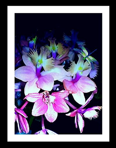 BEAUTIFUL ORCHIDS Flowerlovers Bright_and_bold Loving Flowers!