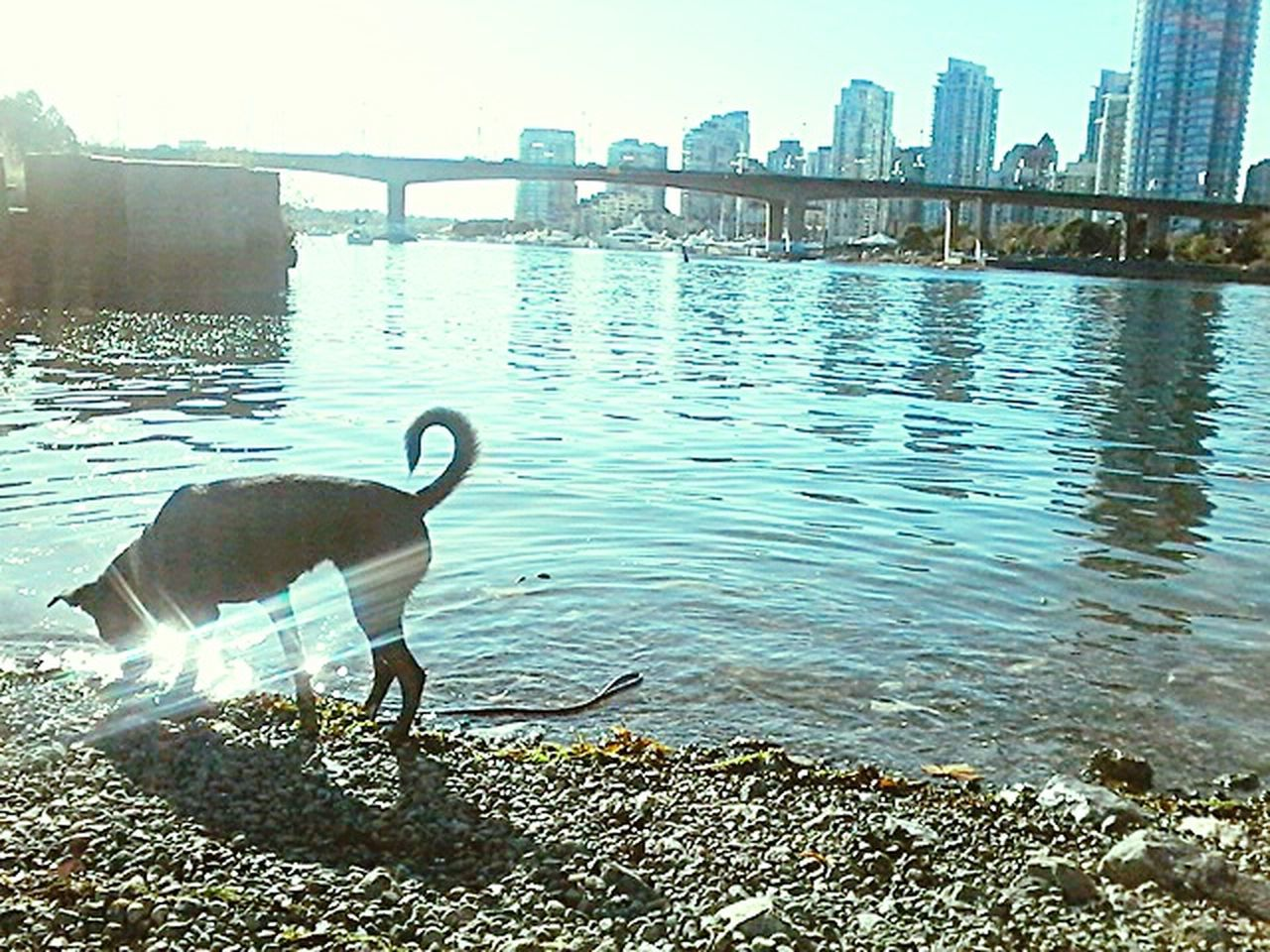 when we went in Vancouver in 2015  my Dog and I ! Water Cityscape No People Animal Themes Outdoors EyeEm Nature Lover EyeEm Gallery Rockies Mountains 2015memories Travel EyeEm Travel Photography EyeEm Vision Canada Coast To Coast Travel Destinations City Life Travel Photography Mountain Nature Nature EyeEm Dogs In The World EyeEm Dog Dogs Of EyeEm