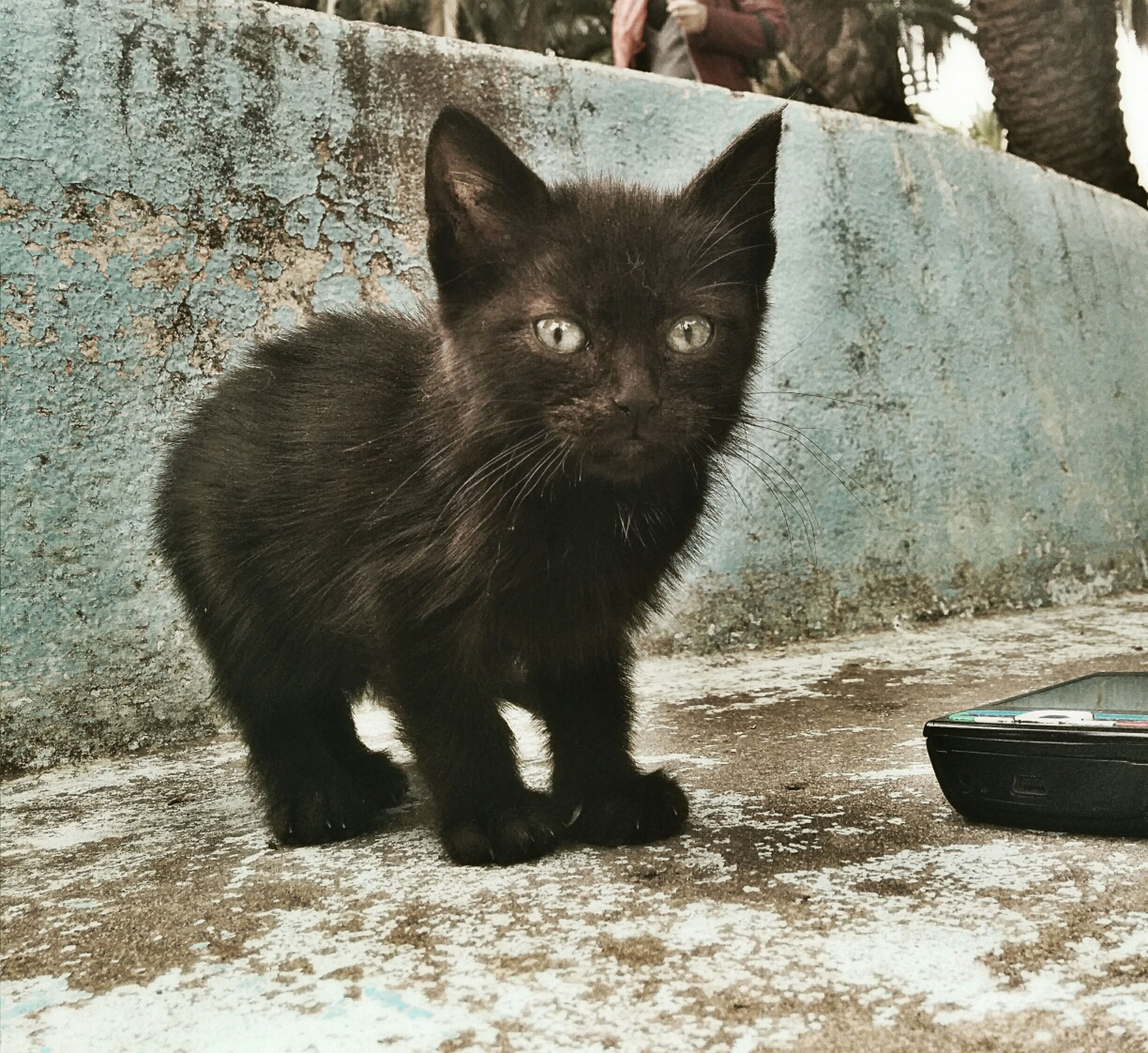 Cat Cat Lovers Cute Animals