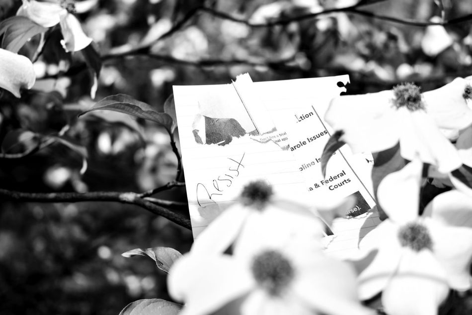 Close-up Day Dogwood Outdoors Paper Peace Politics Protest Resistance  Symbol Symbolism Text Tree White White Flower Resist Long Goodbye