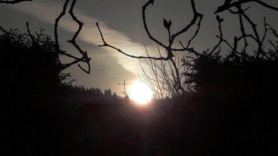 Sun Morning Nature Dancing Sunrise Sonnenaufgang Sonne hirschberg GERMANY🇩🇪DEUTSCHERLAND@ ınstagram @siggis_encounters eyeem EyeEm Gallery Eyeemphotography EyeEm EyeEmNewHere EyeEm Nature Lover Enjoying The Sun Eyeem School Of Photography