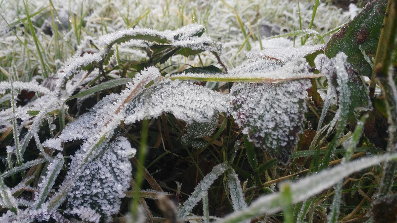 Beauty In Nature Close-up Cold Temperature Day Field Fragility Frost Frozen Fungus Grass Ice Nature No People Outdoors Snow Weather Winter Teddington Lock