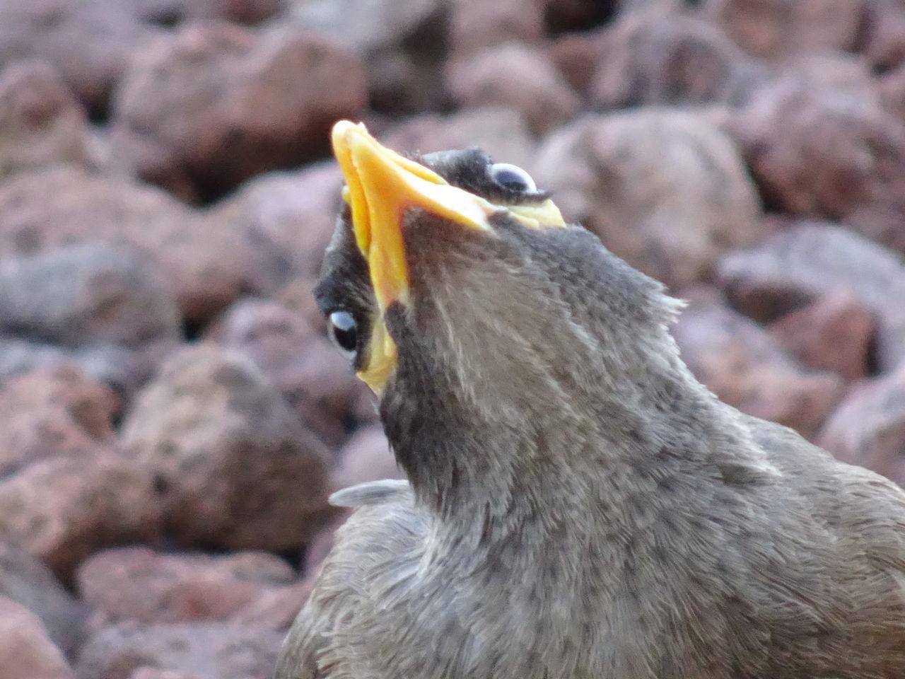 animals in the wild, bird, animal themes, animal wildlife, beak, one animal, young bird, no people, day, nature, close-up, outdoors