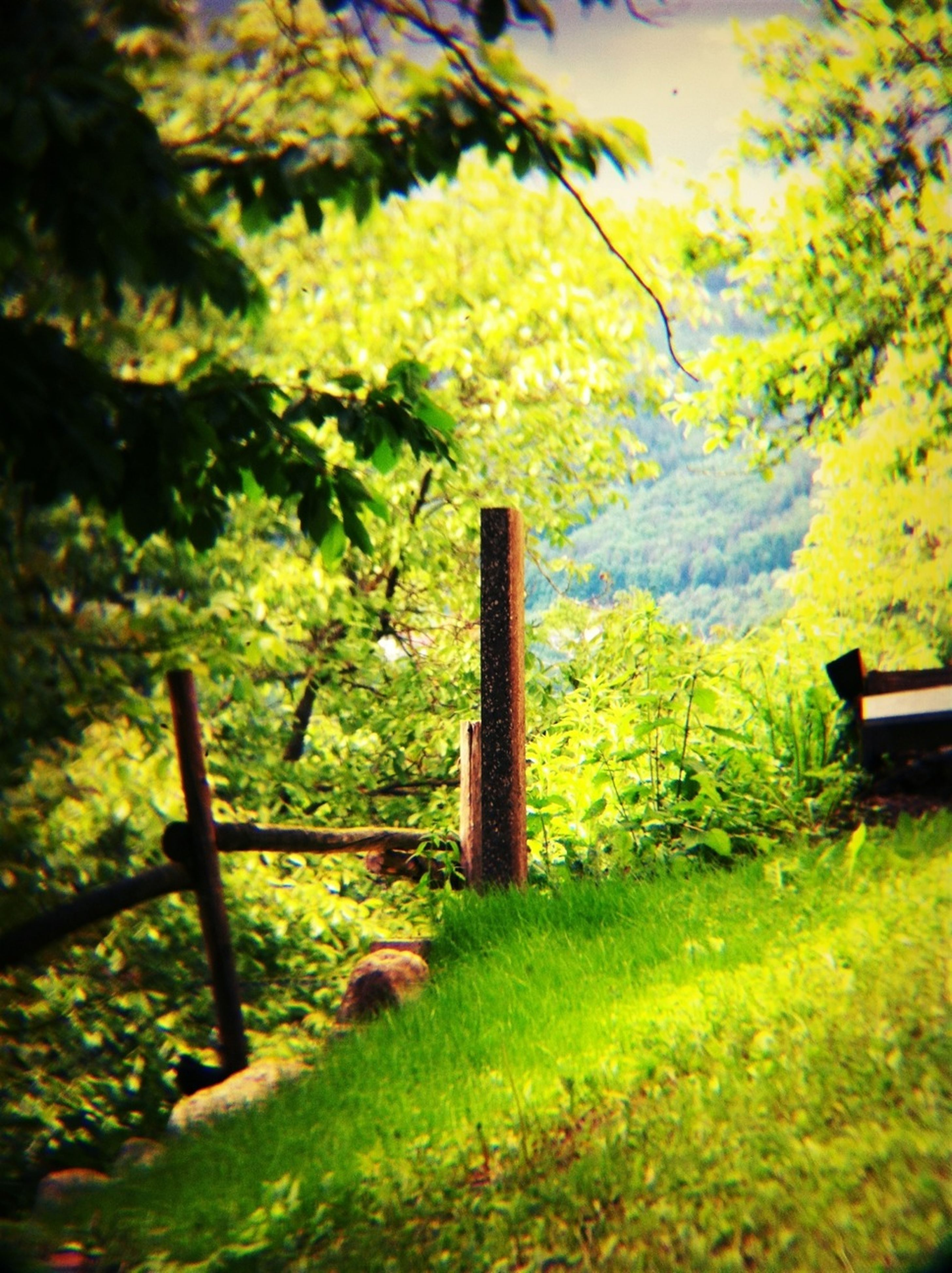 green color, tree, growth, beauty in nature, nature, plant, tranquility, grass, fence, railing, tranquil scene, field, scenics, mountain, flower, park - man made space, green, focus on foreground, branch, outdoors