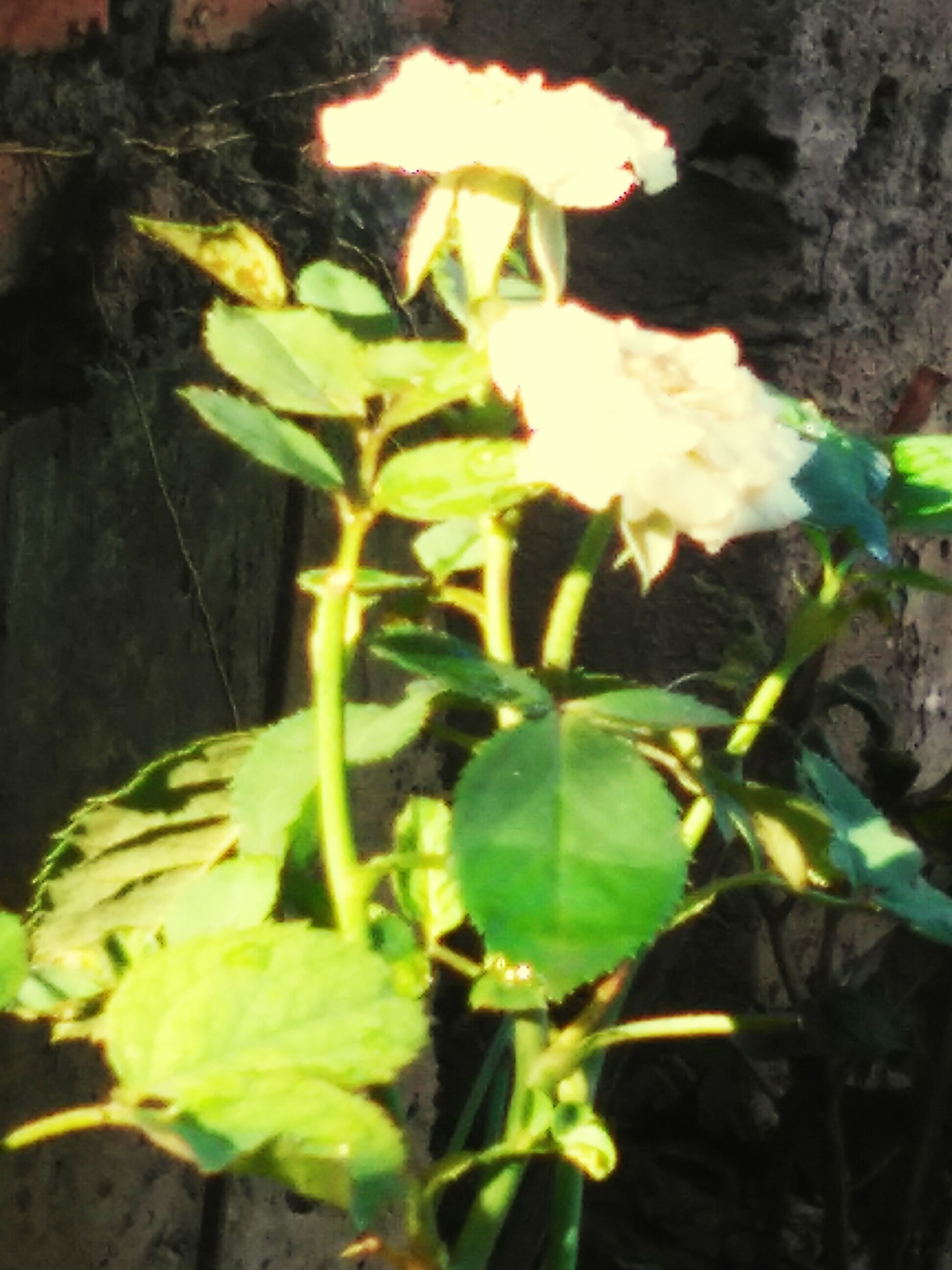 leaf, growth, plant, green color, close-up, nature, sunlight, beauty in nature, growing, focus on foreground, night, outdoors, freshness, no people, fragility, tranquility, flower, stem, sunbeam