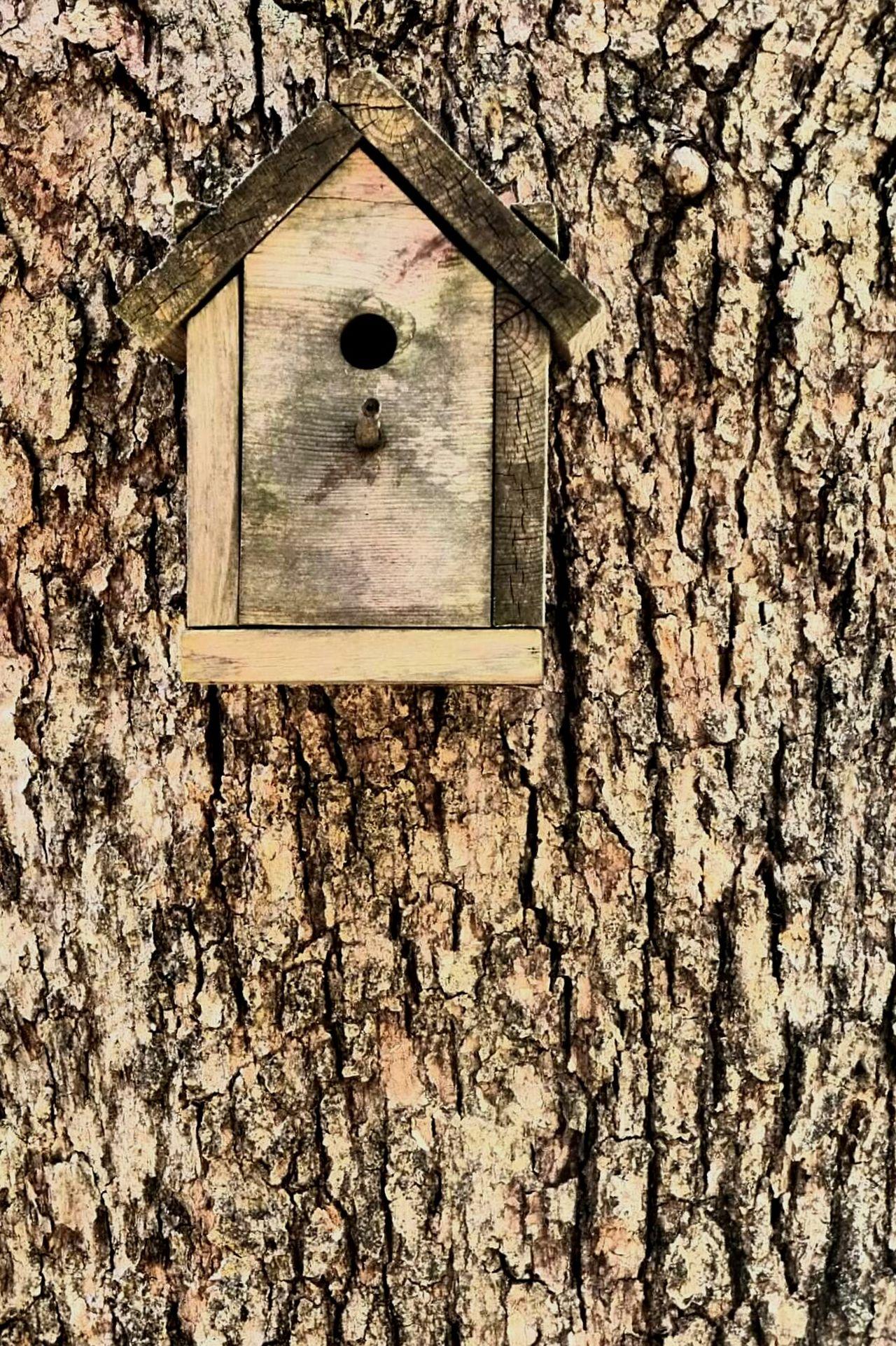 Tree_collection  Birdhouse Treebark Wood Manvsnature  ManmadeVsNature Manmade
