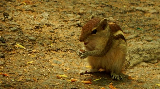 Check This Out First Eyeem Photo Cute Squirrel Smile ✌ Eating!  Squirrel Natgeo EyeEm Animal Lover Capture The Moment Eyeemphoto
